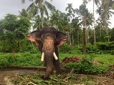 Elefant Meiveda