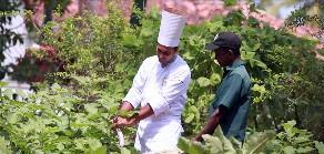 """Lotus Villa - """"Gemüseernte"""" für schmackhafte Ayurvedagerichte"""